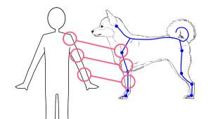 【試著畫吧】抓住狗的特徵