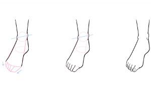 了解各部位的不同!腳部構造及畫法說明