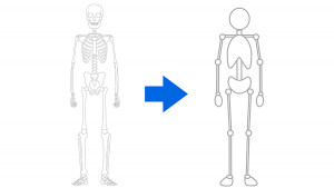 學習人體的基礎【骨骼・肌肉的組成】